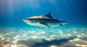 Попытки получить вакцину против коронавируса грозят исчезновением акул