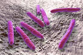 Новое открытие объясняет, как бактериям удается избежать атаки лекарств