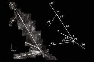 Физики зафиксировали редкое гиперядро с двумя странными кварками