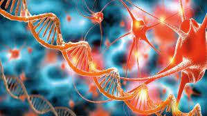 После смерти в мозге человека усиливается активность «зомби-генов»