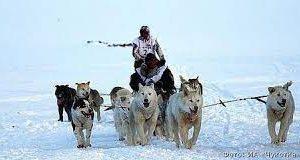 На Чукотке стартовала гонка на собачьих упряжках «Надежда»