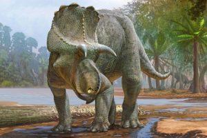 Новый вид рогатых динозавров оказался древнейшим представителем центрозаврин