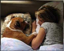Присутствие домашних питомцев в постели значительно улучшает качество сна ребенка