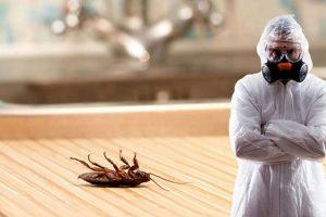 Уничтожение тараканов на предприятиях