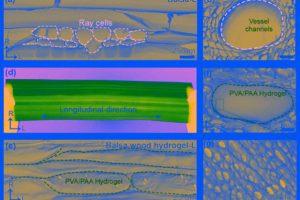 Из дерева сделали ион-проводящие мембраны