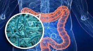 Кишечные бактерии могут мешать нам худеть