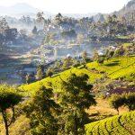 Шри-Ланка упростила визовые правила въезда для туристов
